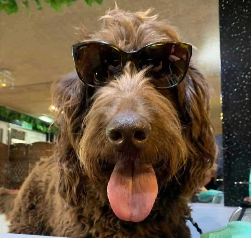 No More Kennels ensure pampered pooches have fun in the sun